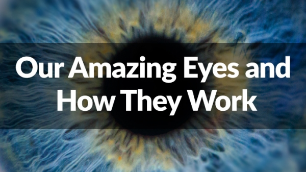 Our Amazing Eyes and How They Work